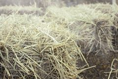 Hay bale agriculture field in farm. Royalty Free Stock Photo
