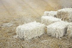 Hay bale agriculture field in farm. Stock Image