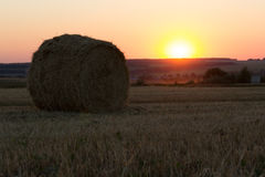 Hay bale. Agriculture field with sky. Royalty Free Stock Image