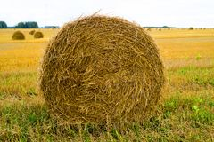 Hay bale. Agriculture field with sky. Rural nature in the farm land. Straw on the meadow. Wheat yellow golden harvest in summer. Countryside natural landscape stock images