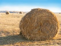 Hay bale. Agriculture field with sky. Rural nature in the farm land. Royalty Free Stock Photo