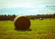 Hay bale. Bales of hay that are now found in the fields of our countryside Stock Image