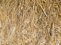 Hay bale closeup Royalty Free Stock Photography