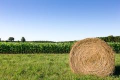 Hay Bale in Corn Field Stock Photos