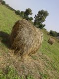 Hay bale in the countryside Stock Image