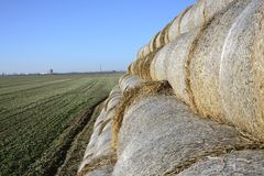 Hay bale in the countryside. In green field Stock Image