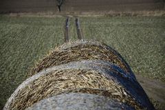 Hay bale in the countryside. In green field stock photography