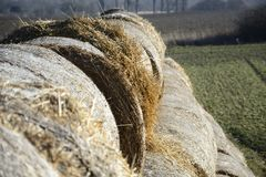 Hay bale in the countryside. In green field Stock Photo