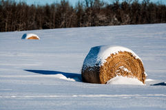 Hay Bale Covered in  Snow. Hay bales left in the field over winter and covered with snow Royalty Free Stock Photo