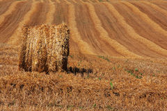 Hay bale on cropped field Stock Images
