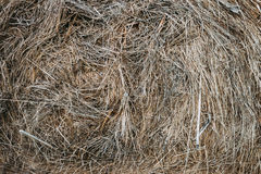 Hay bale of dried grass. In the form of a background Royalty Free Stock Photos