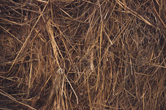 Hay bale of dried grass. In the form of a background Stock Image