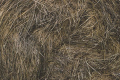 Hay bale of dried grass Stock Photo