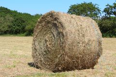 Hay bale in a field Royalty Free Stock Photography