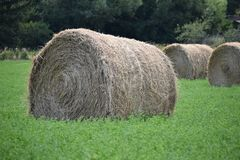 Hay bale in farmer`s field. Hale bale in farmer`s field while fresh grass grows up around it stock photos