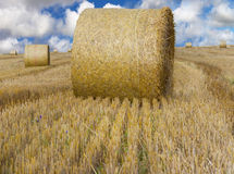 Hay bale on a field Royalty Free Stock Image