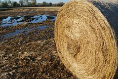 Hay bale and field Royalty Free Stock Photography