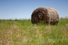 Hay bale on field. A bale of hay lies lonely on a field, against a clear blue sky Stock Images
