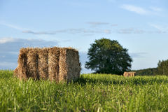 Hay bale on field Royalty Free Stock Image