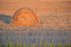 Hay bale in field. Hay bale in empty field with rays of sunshine Stock Photos