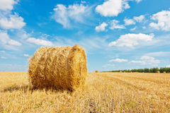 Hay bale on the field Royalty Free Stock Photography