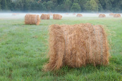 Hay bale field Stock Image