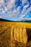 Hay bale in a field Royalty Free Stock Photos