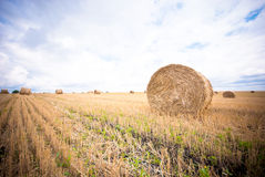 Hay Bale in the Field Royalty Free Stock Photo