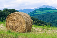 Hay bale field. Royalty Free Stock Photo