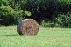 Hay bale royalty free stock image