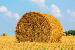 Hay bale on the field Royalty Free Stock Photos