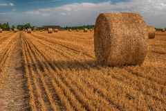 Hay bale in the field Stock Images