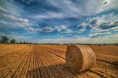 Hay bale in the field Royalty Free Stock Image