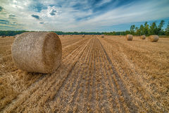 Hay bale in the field Royalty Free Stock Photos