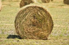 Hay bale on the field Stock Photos