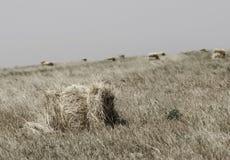 Hay Bale in Field Stock Photo