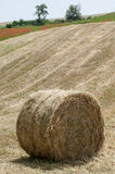 Hay bale on the field after harvest Royalty Free Stock Photo
