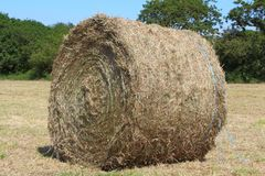 Hay bale in a field. After harvesting in Brittany Royalty Free Stock Image