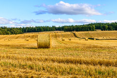 Hay bale field in the Highlands, Scotland Royalty Free Stock Photography