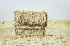 Hay Bale in Field Stock Images