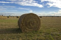 Hay Bale in Field royalty free stock photo