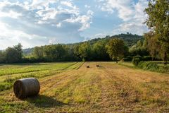 Hay bale in the field stock image