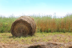 Hay Bale in Field Royalty Free Stock Photography