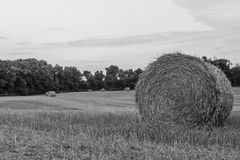 Hay Bale. A field in Southern Wisconsin that was recently harvested stock photography