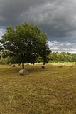 Hay bale field. In summer Stock Photography