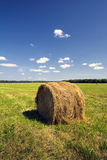 Hay bale in a field on a sunny day Royalty Free Stock Photos