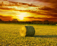 Hay Bale on the field. At sunset Royalty Free Stock Image