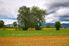 Hay bale field. Umbria. Italy. Royalty Free Stock Photography