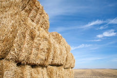 Hay bale in a field Royalty Free Stock Photo