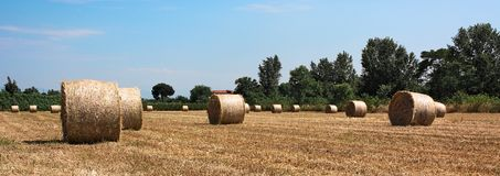Hay,bale,field,wheat,italy. Hay bales in wheat field Stock Photo